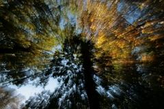 kaleidoscopic-canopy