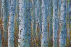 more-birches-005